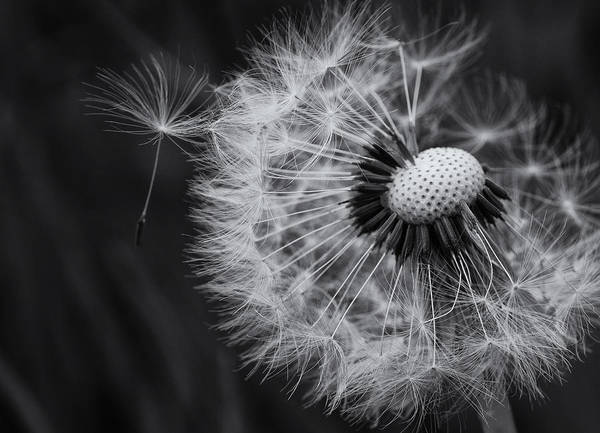 Wish Photograph - If Only Wishes Came True by Susan Capuano