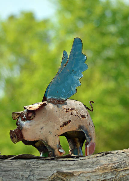 Wall Art - Photograph - If Pigs Could Fly by Patricia Caldwell