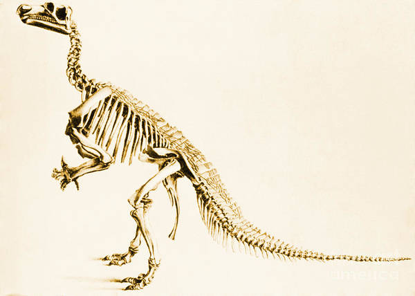 Photograph - Iguanodon Mesozoic Dinosaur by Science Source