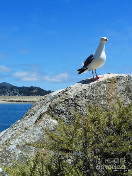 Marine Layer Photograph - I'm King Of The World by Methune Hively