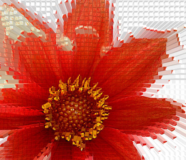 Photograph - Impossible Dahlia by Emanuel Tanjala