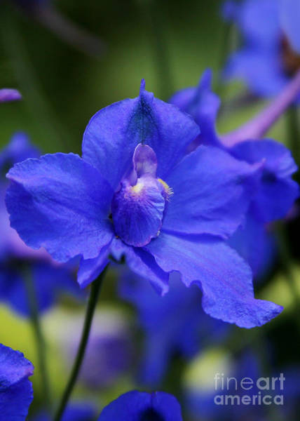 Photograph - In A Blue Mood by Sabrina L Ryan