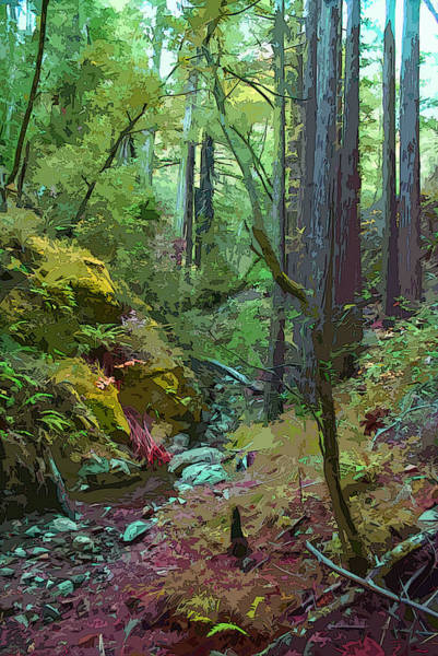 Photograph - In A Very Mystical Redwood Forest On Mt Tamalpais by Ben Upham III