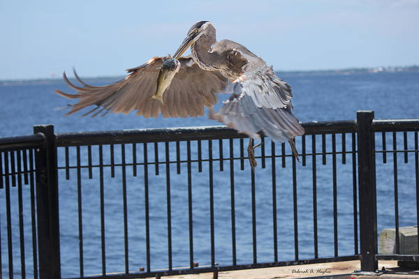 Photograph - In Flight by Deborah Hughes