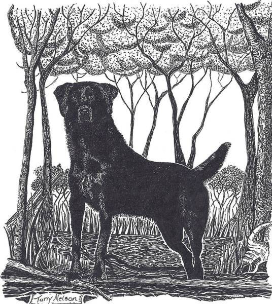 Duck Hunting Drawing - In Her Element by Tony  Nelson