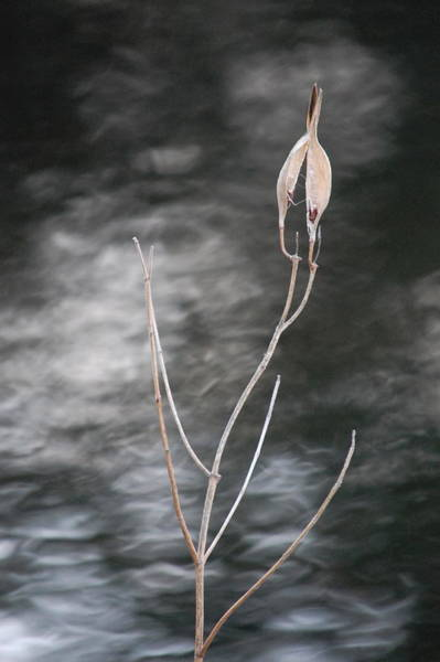 Photograph - In Mourning by Mary McAvoy