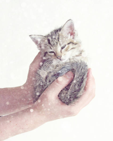 Cute Kitten Photograph - In Safe Hands  by Amy Tyler