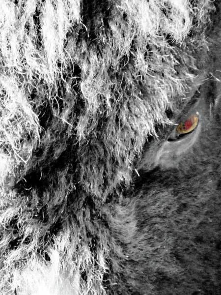 Photograph - In The Eye Of The Buffaloe  by Lizi Beard-Ward