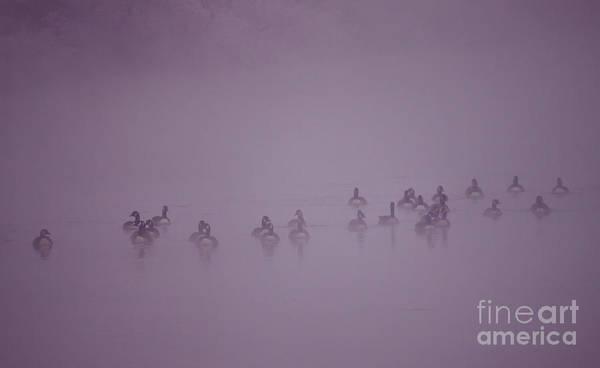 Wall Art - Photograph - In The Fog by Angel Ciesniarska