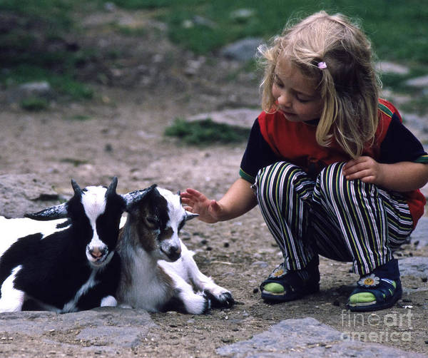 Photograph - In The Petting Zoo by Heiko Koehrer-Wagner