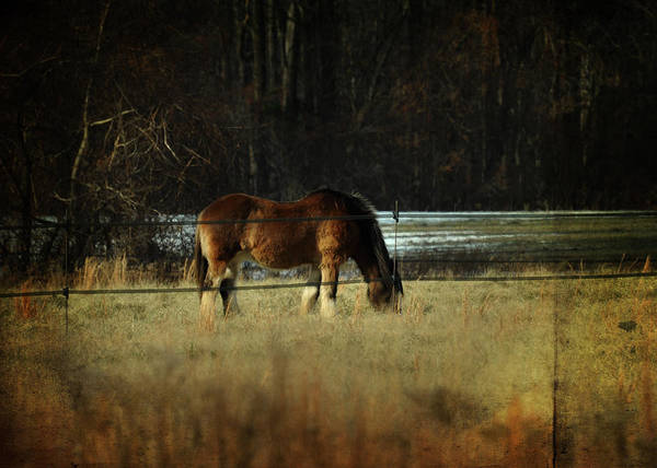 Photograph - In The Winter Pasture by Rebecca Sherman