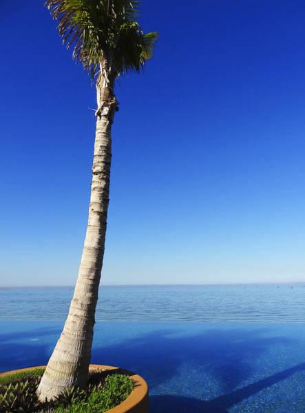 Palm Frond Digital Art - Infinity Pool Palm by Anne Mott