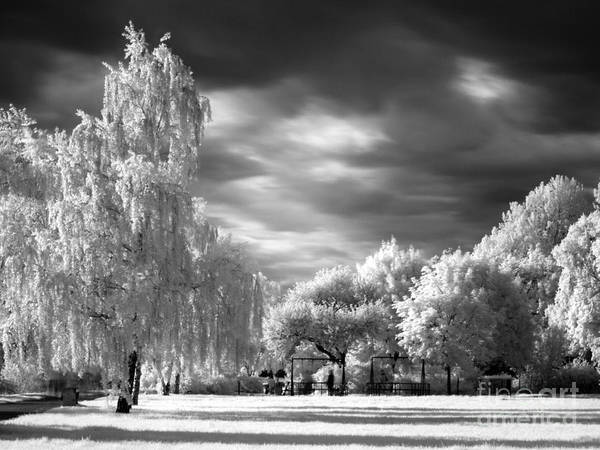 Photograph - Infra Red Park by Odon Czintos
