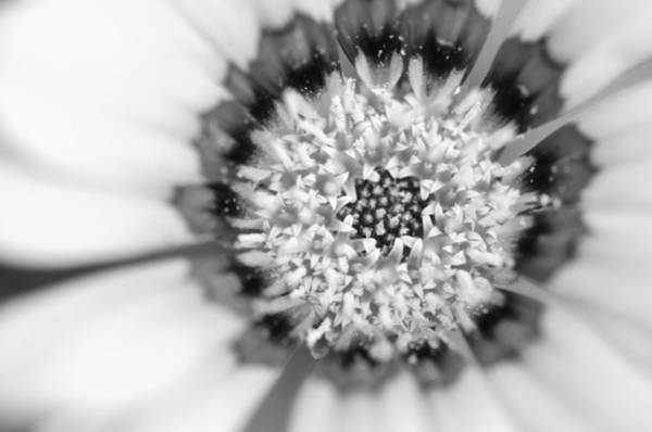 Photograph - Inner World by Margaret Pitcher