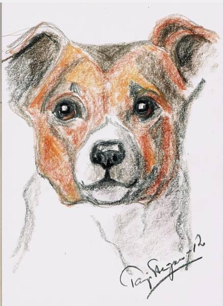 Hund Drawing - Innocence by Tarja Stegars