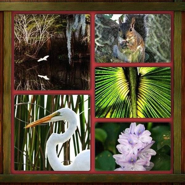 Egret Photograph - #instacollage#nature#squirrel #egret by Laura OConnell
