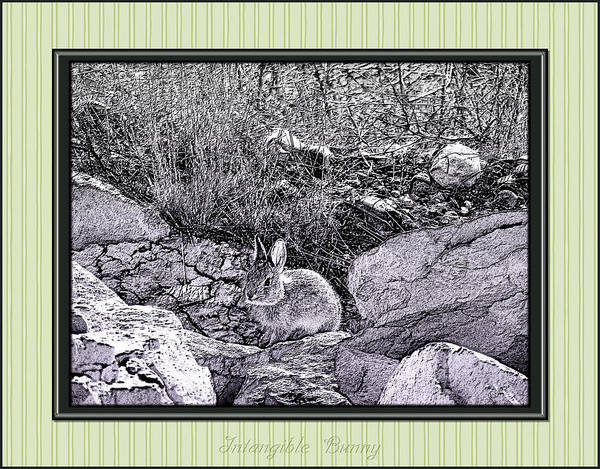 Photograph - Intangible Bunny by Susan Kinney
