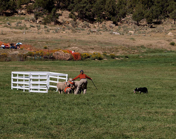 Photograph - Into The Paddock by Joshua House