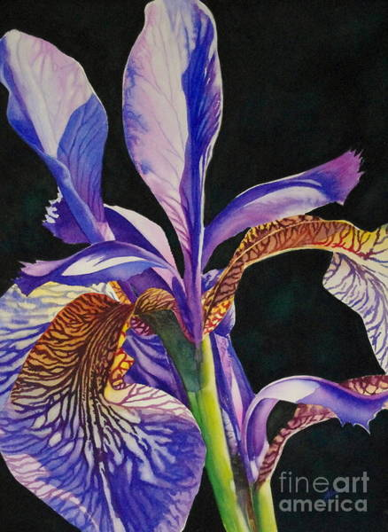Painting - Iris by Greg and Linda Halom