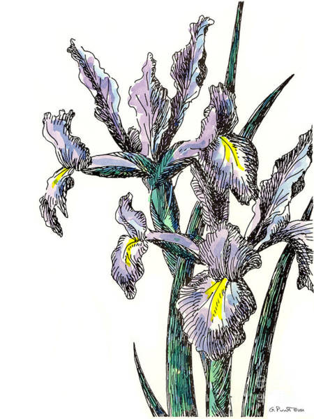 Painting - Iris Watercolor 4 by Gordon Punt