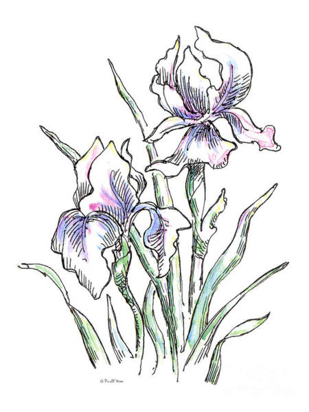 Painting - Iris Watercolor Drawing 2 by Gordon Punt