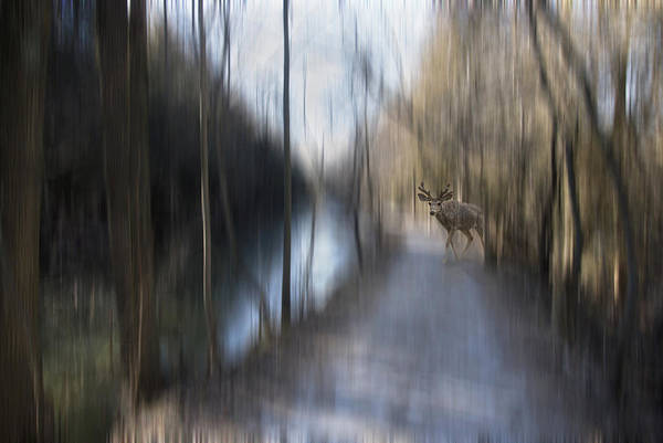 Photograph - Is It Just My Imagination by Robin Webster