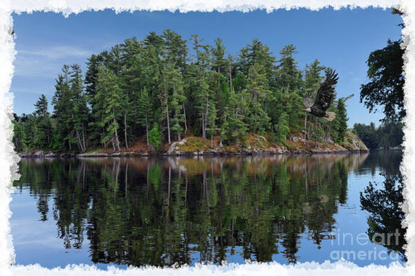 Photograph - Island At Lake Of Woods At Canada by Dan Friend