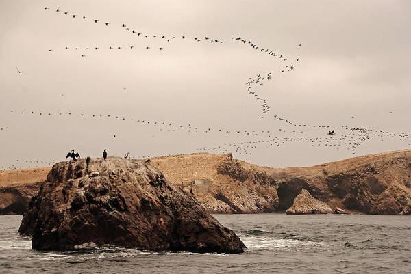 Wall Art - Photograph - Islas Ballestas - Peru by Andrea Cavallini