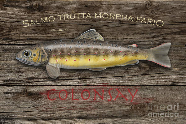 Painting - Isle Of Colonsay - Brown Trout Salmo Trutta - Hebrides - Islay - Jura - Skye - Mull - Fish Sign  by Urft Valley Art