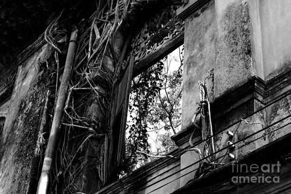 Liane Photograph - It Grows by Dean Harte