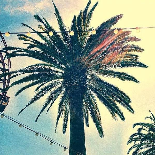 Iphone Wall Art - Photograph - It's A Palm Tree. #la #losangelas by Johnathan Dahl