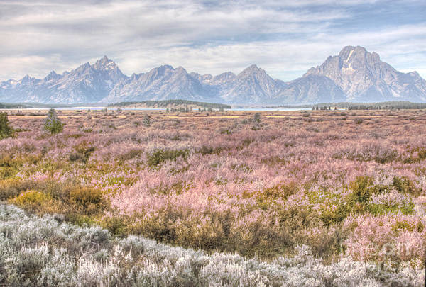 Photograph - Jackson Lake Lodge Willow Flats by Katie LaSalle-Lowery