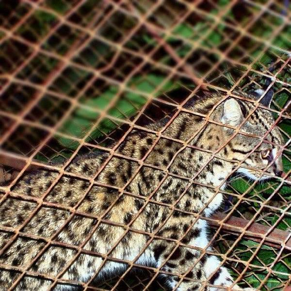 Jaguar Photograph - #jaguar En La #reserva #ecológica De by Fer Nando