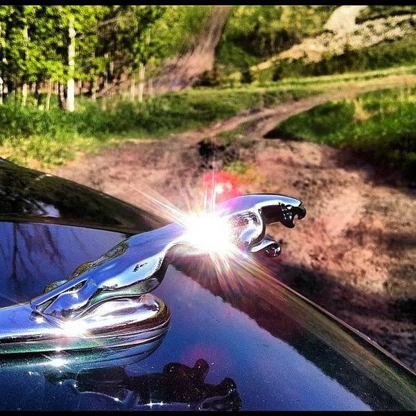 Jaguar Photograph - #jaguar #xtype #emblem #summer #offroad by Sam Sana