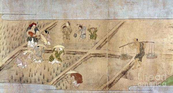 Feudal Japan Wall Art - Photograph - Japan: Rice Farming by Granger