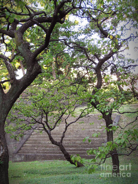 Photograph - Japanese Cherry Trees by Eena Bo