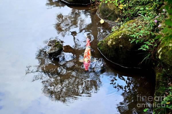 Ornamental Fish Photograph - Japanese Koi Pond by Dean Harte