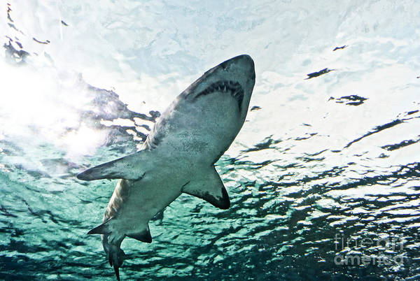 Wall Art - Photograph - Jaws by Matthew Trudeau