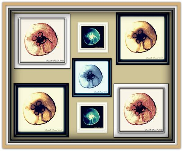 Photograph - Jellyfish Bonanza by Danielle  Parent