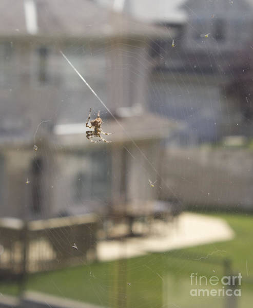 Photograph - Jewel Spider And Web by Donna L Munro