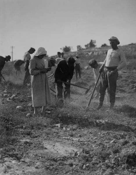 Kibbutz Photograph - Jewish Immigrants Cultivating by Everett