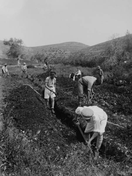 Kibbutz Photograph - Jewish Immigrants Digging A Trench by Everett