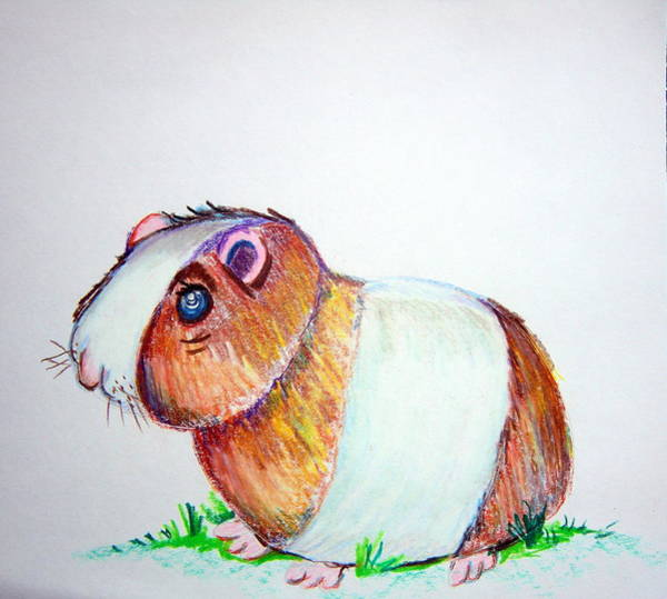 Hamster Drawing - Jinney by Mindy Newman