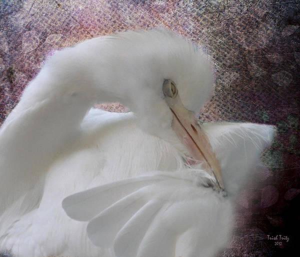 Photograph - Joelle's Egret by Trish Tritz