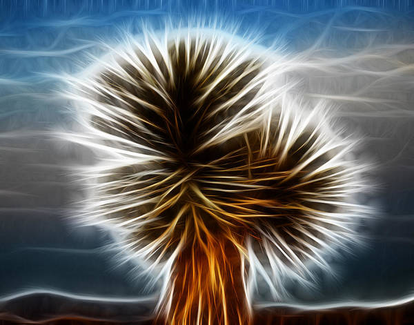 Photograph - Joshua Tree Close Up Fractalius by Maggy Marsh