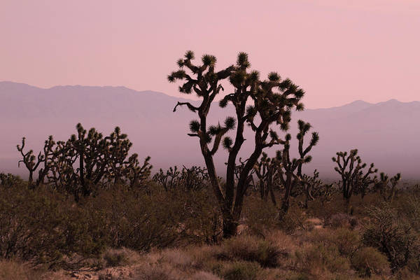 Photograph - Joshua Tree National Park by Pierre Leclerc Photography