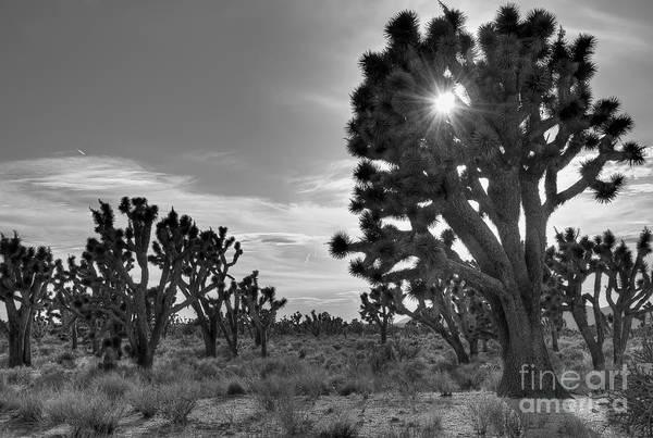Photograph - Joshua Tree National Preserve by Eddie Yerkish