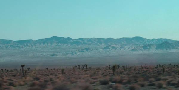 Death Valley Wall Art - Photograph - Joshua Trees by Naxart Studio