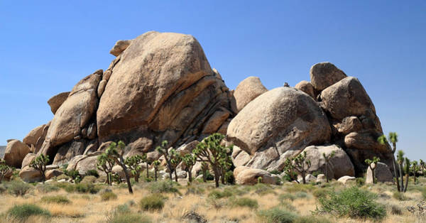 Photograph - Jumbo Rocks In Joshua Tree National Park by Pierre Leclerc Photography