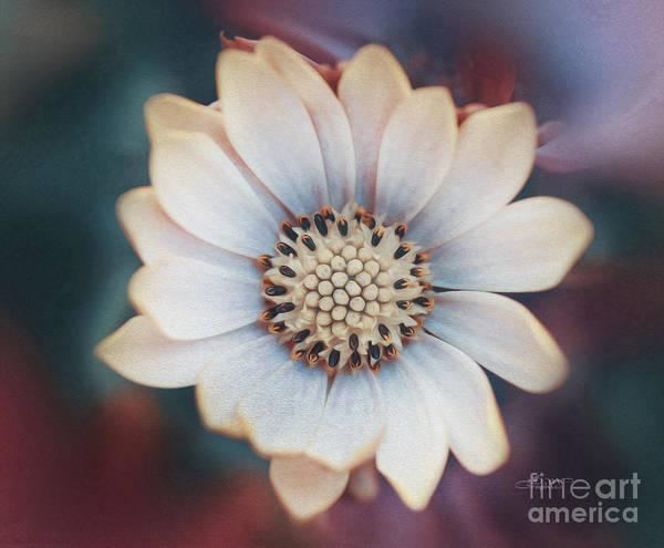 Wall Art - Photograph - Just A Flower by Jutta Maria Pusl